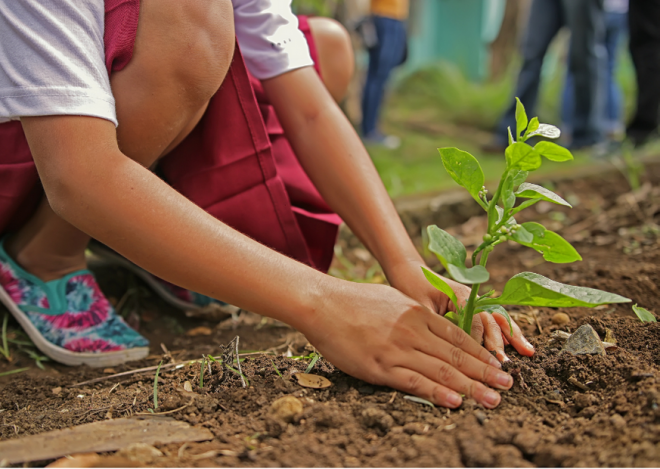 Child planting a tree seedling by hand